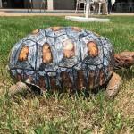 Photo: 3D nyomtatóval készítettek új páncélt a tűzben megsérült teknősnek