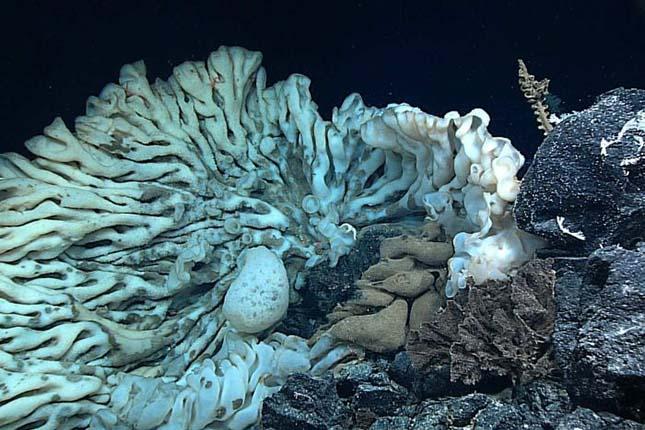 tengeri-szivacs-3