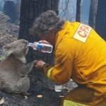 Tűzoltók, akik életük kockáztatásával mentettek meg állatokat