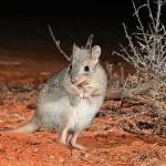 Ötven állat- és növényfajjal bővült a veszélyeztetett fajok listája Ausztráliában