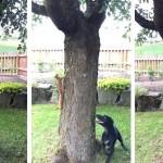 Bolondját járatta a fürge mókus a játékos kedvű kutyával