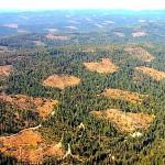 Elképesztő mennyiségű fa tűnik el évente a Földről