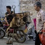 Photo: Elkezdődött a dél-kínai kutyahúsfesztivál, ami ismét felkorbácsolta az indulatokat