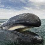 Photo: 25 éve készíti csodálatos fotóit a bálnákért rajongó fotós