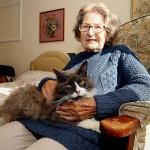 Felkutatta az idősek otthonába került gazdáját a hűséges cica