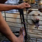 Elkezdődött a dél-kínai kutyahúsfesztivál, ami ismét felkorbácsolta az indulatokat