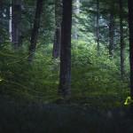 Éjszakai szentjánosbogár-túrákat indít a Duna-Ipoly Nemzeti Park