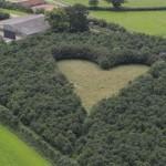 Tölgyfákból formált szívet elhunyt felesége emlékére