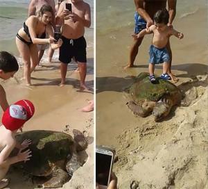 Majdnem belahalt a turistákkal való találkozásba egy tengeri teknős