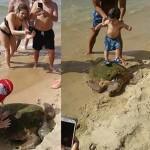 Photo: Majdnem belahalt a turistákkal való találkozásba egy tengeri teknős