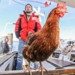 Különös páros – egy tyúkkal hajózza körbe a világot egy francia férfi