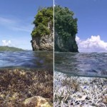 Photo: A teljes ökoszisztéma összeomlott a Nagy-korallzátony egyes részein