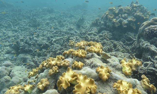 barrier-reef-3