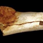 A rák legrégebbi nyomaira bukkantak az ember egy ősének csontkövületén