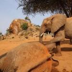 Photo: Régi barátja nyugtatta a mérgezett nyíllal meglőtt elefántot