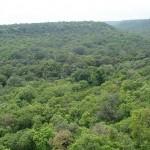 50 millió fát ültettek el Indiában egy nap alatt