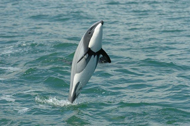 maui-delfin-3
