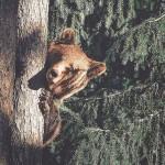 Csodálatos fotókat készít az erdők lakóiról a fiatal finn természetfotós