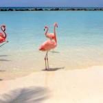 A flamingók tengerpartja