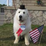 Ismét kutya polgármestere lett egy amerikai kisvárosnak