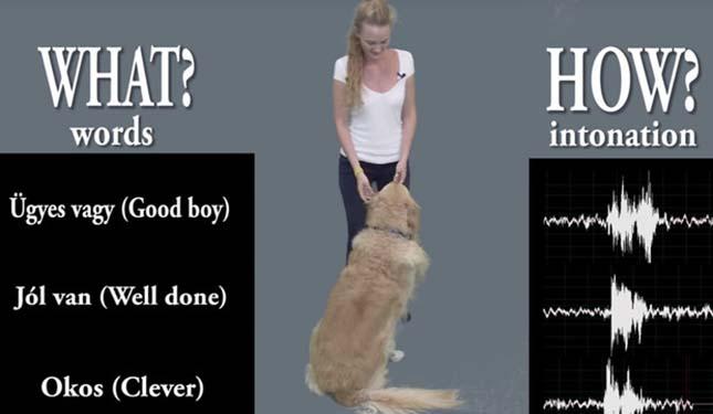 kutyak-3