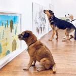 A világ első, kutyáknak szóló kiállítása