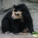 Egyre több állat hal éhen a venezuelai állatkertekben