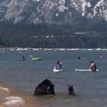 Pancsoló medvecsalád lepte meg a strandolókat