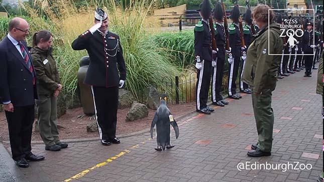 pingvin-5