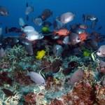 Létrehozták a világ legnagyobb tengeri rezervátumát