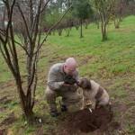 Photo: A világ legnagyobb fekete szarvasgombáját találta meg földjén egy ausztrál farmer