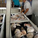 Photo: Több száz tobzoskát találtak lefagyasztva egy indonéz férfi házában