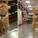 Photo: 9 éve dolgozik egy New York-i üzletben Bobo, a vörös macska