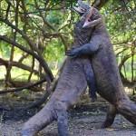 Így küzdenek meg egymással a komodói sárkányok
