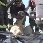 9 nappal az olaszországi földrengés után élve mentettek ki egy kutyát a romok alól
