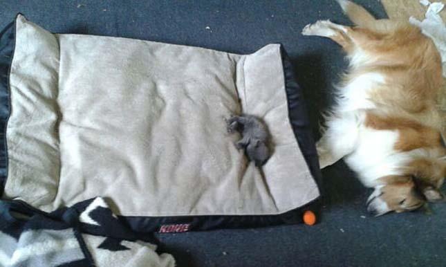 kutyak-es-macskak-19