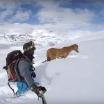 Snowboardosok mentették meg a hó fogságába esett lovat
