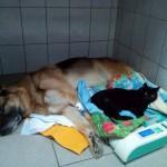 Egy lebénult cica bátorítja az állatkórház betegeit