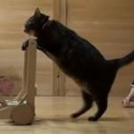 Aranyos videó – így tanítja járni a cica a kisbabát