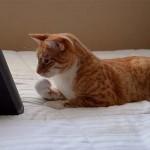 Hamarosan megjelenik az első kifejezetten macskáknak szánt zenei album