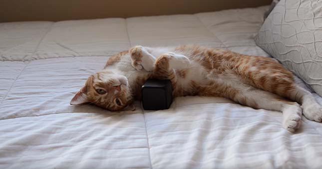 macska-zene