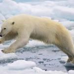 Megközelítette az eddig mért minimumot az északi-sarki jég kiterjedése