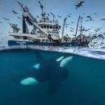 Varázslatos fotók az Év Természetfotósa versenyen