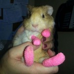Photo: Pórul járt állatok, akik aprócska gipszet kaptak
