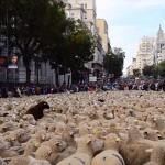 Photo: Több mint kétezer birka lepte el a spanyol főváros utcáit