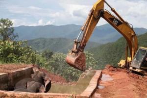 Két nap elteltével tudták kiszabadítani a víztárolóba esett elefántokat