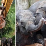 Photo: Két nap elteltével tudták kiszabadítani a víztárolóba esett elefántokat
