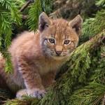 Drasztikus mértékben csökkentek az állatfajok populációi az elmúlt évtizedekben