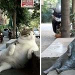 Szobrot kapott Isztambul világhírű macskája