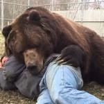 Így ölelgeti gondozóját Jimbo, a 700 kilós medve